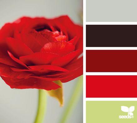 agencement couleur logo