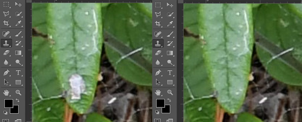 photoshop outil tampon clone